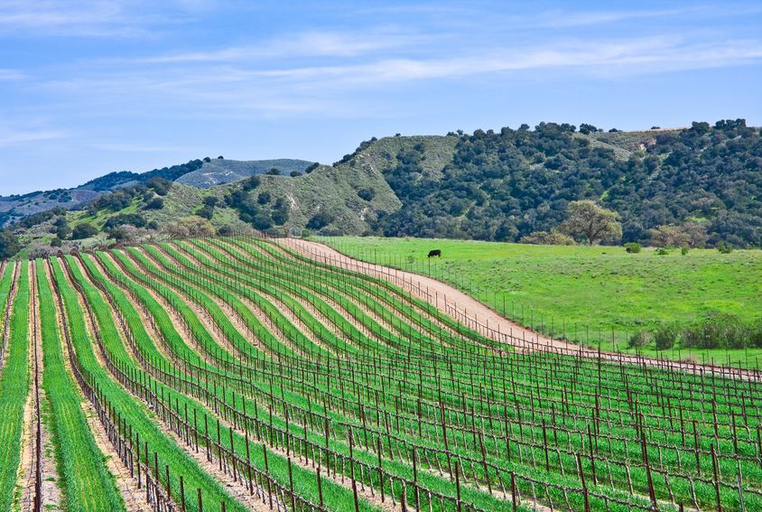 Jo Diaz photo of Santa Barbara County Vineyard